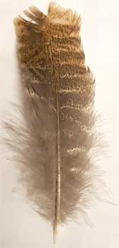 Barred Wing Smudging Feather 12""